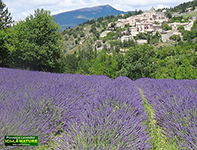 Provence - Cote d'Azur walking tours